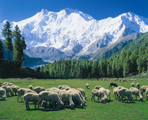 Nanga Parbat (8126-M) Expedition