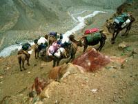 Trekking to K2 (Chogori Peak)